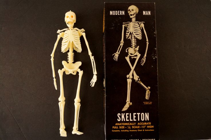Vintage Human Skeleton Anatomy Model in Original Box, 1/6 scale Modern Man (c.1960s)