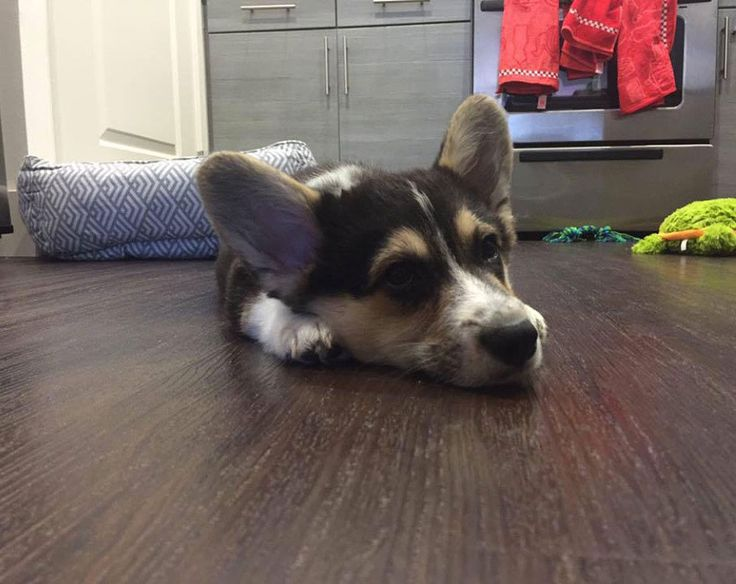 Top 20 Just Viral Adorable Cute Puppy Pictures of the Day