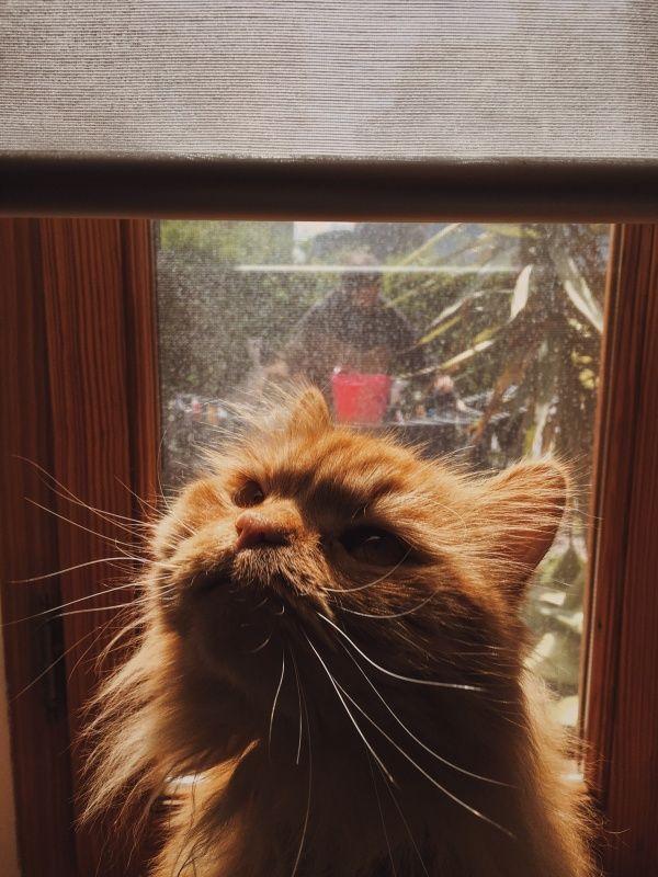 Capperi  | costanzam | VSCO  #cat #redcat #cats