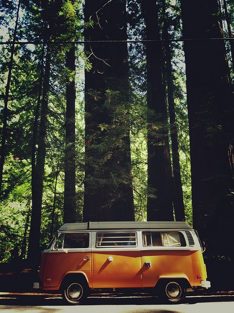 #Redwoods in Northern California - Throwing darts at a map. #Travel #Adventure #RoadTrip #Explore #World #Wanderlust #Volkswagen