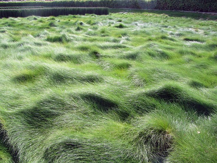 Festuca rubra | Creeping Red Fescue  Can be left un-mown for a lush prairie appearance | generally needs full sun to thrive | Reasonably well-drained soil Moderate watering | somewhat drought tolerant if shaded | Zone 7-11 | Space 1-2′ | Height 12″