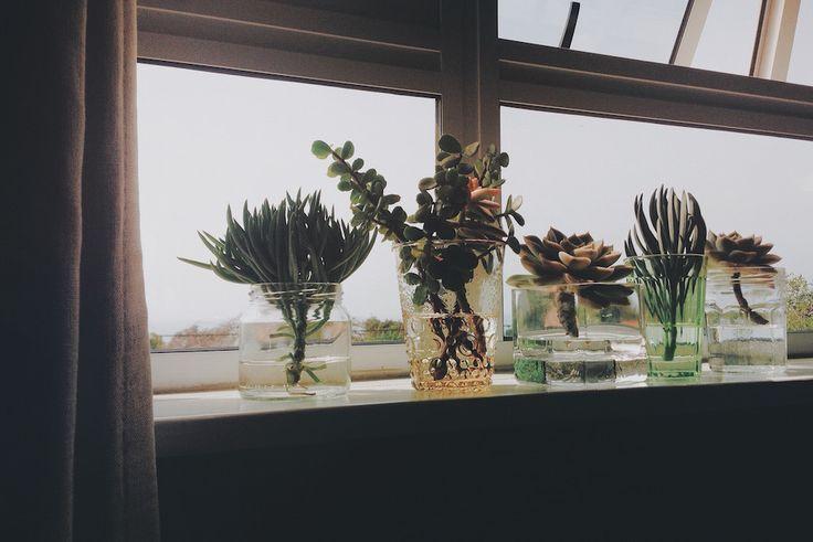 The power of indoor plants! #green #freelance #plants