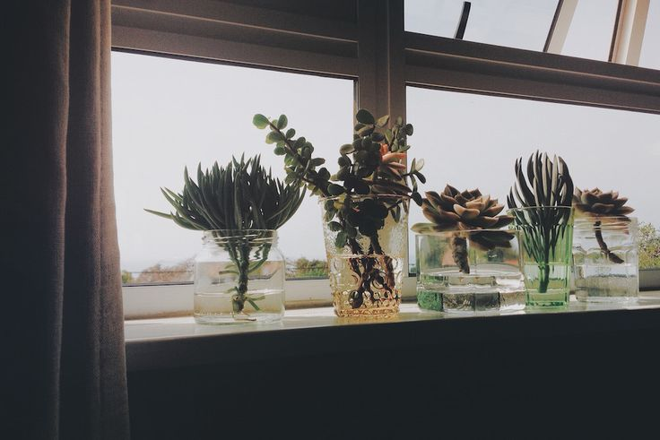The power of indoor plants! #green #freelance #plants