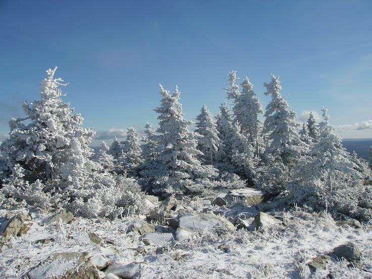 Фото ёлки запорошенные снегом в городе Сатка