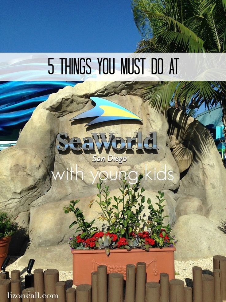 A must do list for Sea World San Diego when traveling with Young kids - lizoncall.com