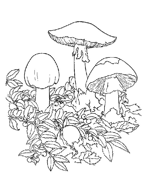 coloring pages of shrooms - photo#24