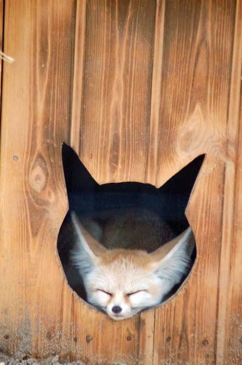 The fox hole.