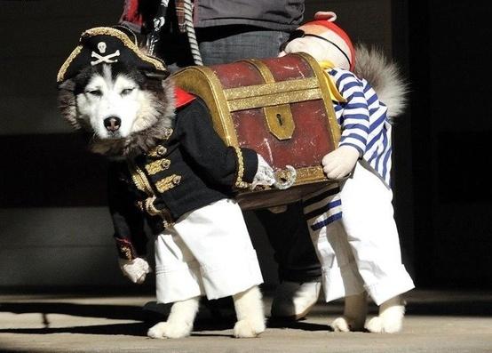 cool dog holloween costume