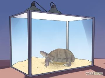 How to take care of your box turtle