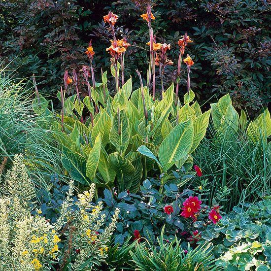 3225 Best Images About Gorgeous Garden Plants On Pinterest