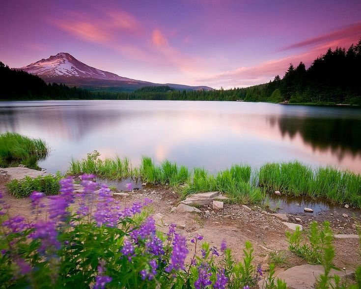 Details about flowers lake mountains wall print