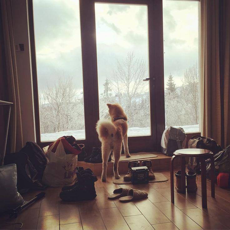 Выходные не обещали ничего особенного.  Один звонок и мы с Горо уже собираем сумку.. Насыпаем корма на 2 дня.. И вот они, снежные горы. Любимая стихия.