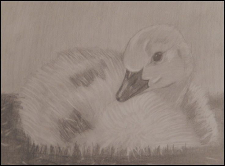 Duck by 8manu on DeviantArt