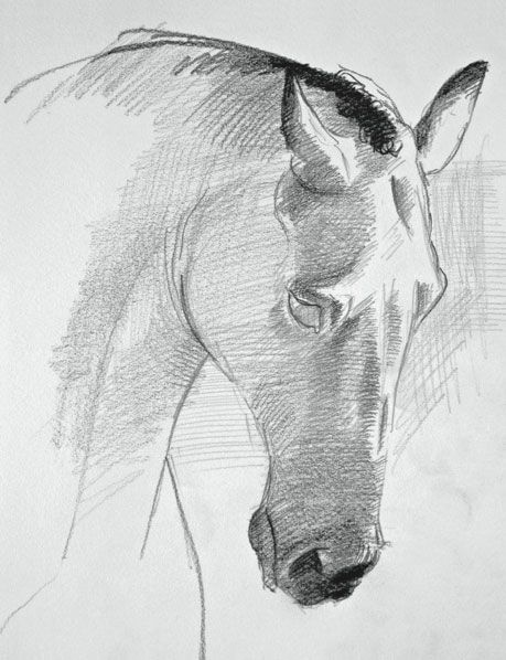 """See a mini-demo on how to draw a horse's face, from David Sanmiguel's """"Drawing Horses: Basic Drawing and Painting Techniques."""""""
