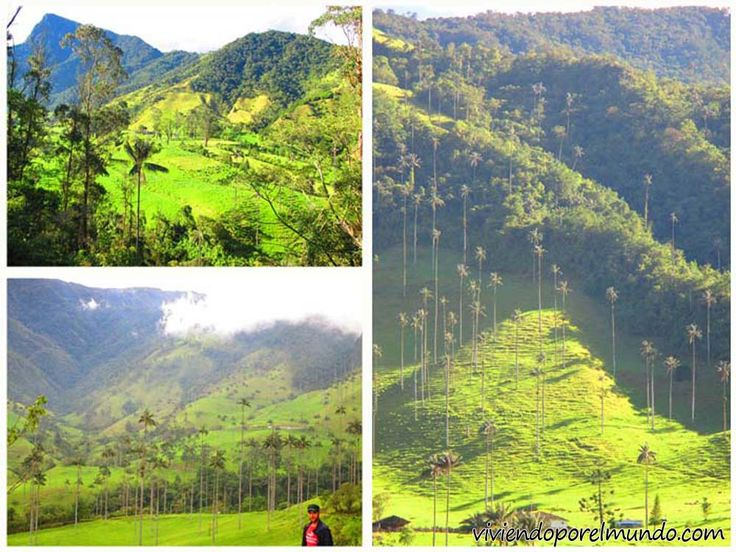 Valle de Cocora en Salento, Colombia