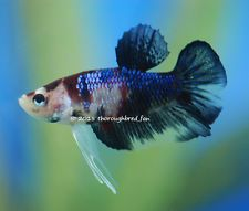 ... images about Aquario on Pinterest Betta, Betta fish and Aquascaping