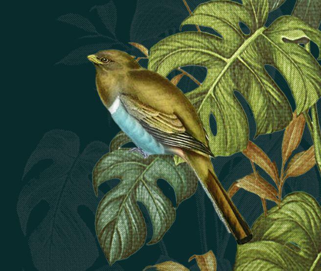 detail, hidden birds night