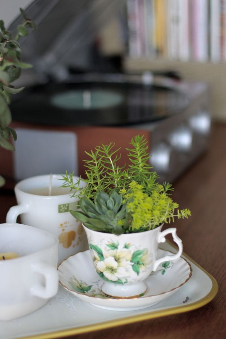 Totally want to do some of these in my home!  Maybe office too?  Lovely teacup succulents