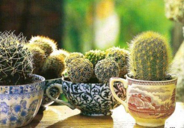 Come-decorare-casa-con-le-piante-grasse