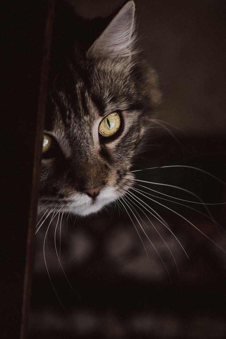 Wild Cat - null