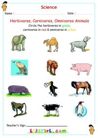 List of Synonyms and Antonyms of the Word: herbivore carnivore ...