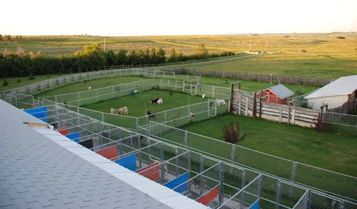 Gone wild kennels in cochrane alberta dog boarding cat for Boarding facility for dogs