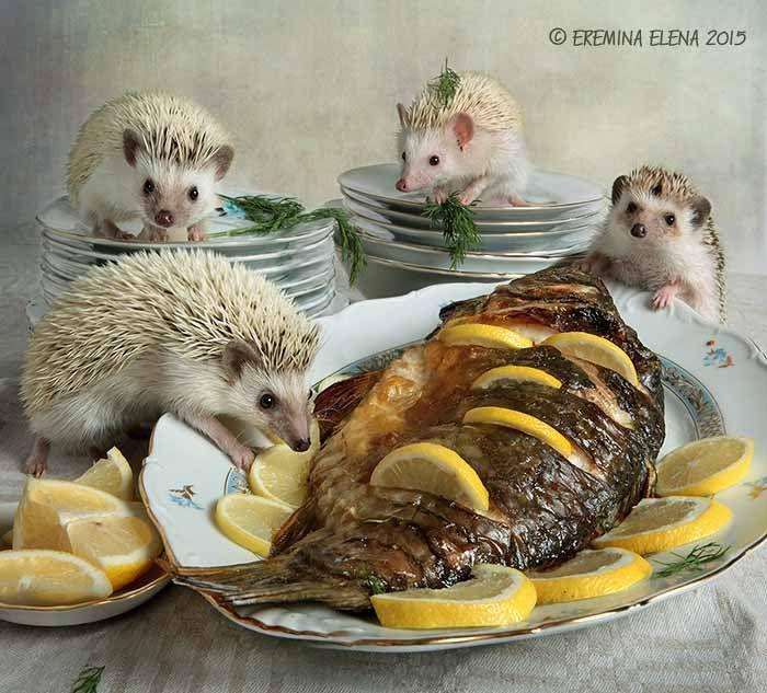 Картинки с добрым обедом прикольные