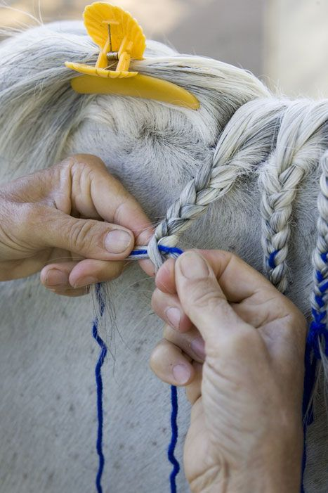 Horse Mane Braiding Step by Step,  I'm new to this where do i find the instructions that go with this?