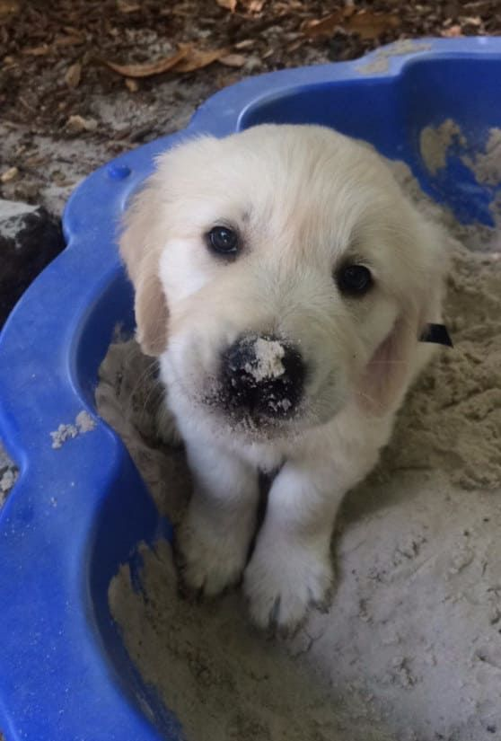 The 100 Most Important Puppy Photos Of All Time – 76. The Sandbox Buddy; The little sand spot on his nose is honestly out of this world. Just let it soak in for a second. SO CUTE. http://www.pindoggy.com/pin/the-100-most-important-puppy-photos-of-all-time-76-the-sandbox-buddy-the-little-sand-spot-on-his-nose-is-honestly-out-of-this-world-just-let-it-soak-in-for-a-second-so-cute/