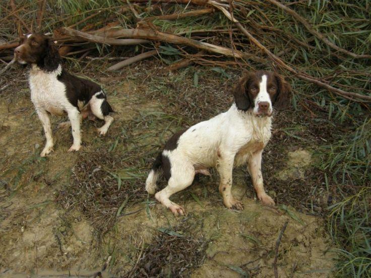 Los dos perros http://www.encuentos.com/fabulas/los-dos-perros/