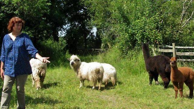 Myriam Noirot élève quelques moutons de races mérinos de Rambouillet, solognote, thônes et marthaud et un couple d'alpaga dont elle tire la laine.