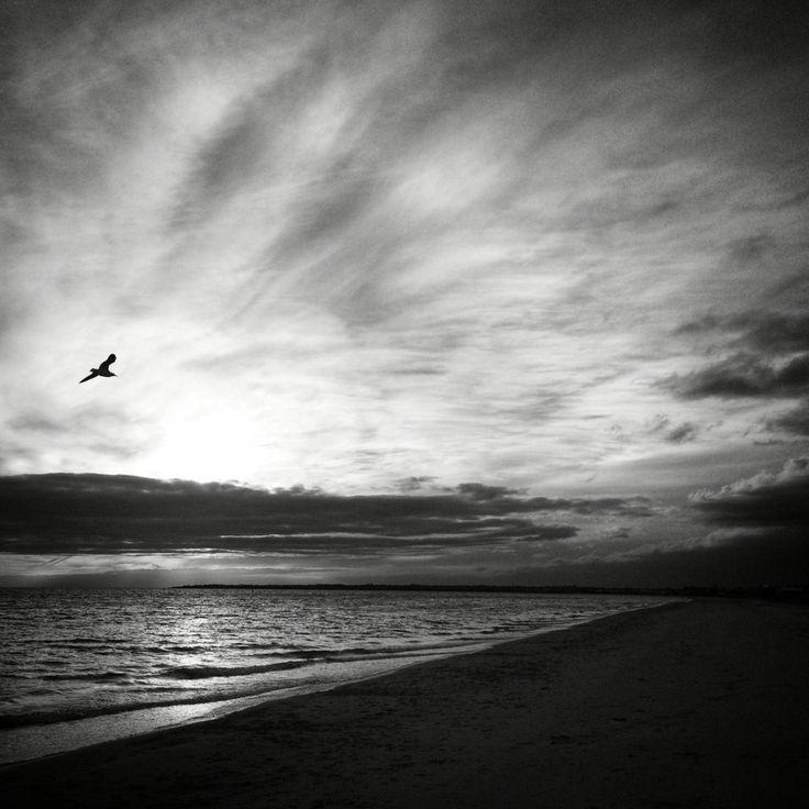 Seagull gliding over Aspendale Beach