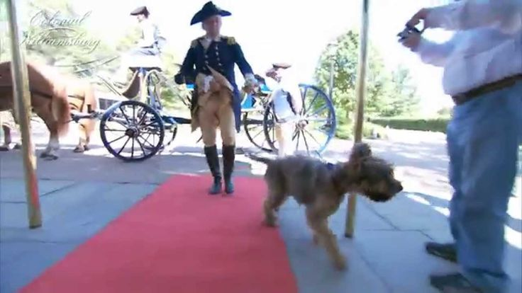 Dogs In Colonial Williamsburg? On October 15th a walk for the humane society will take place in the Colonial Williamsburg on Duke Of Gloucester Street. So bring the pooch to join, of all people, George Washington and CWF's resident dog, Liberty, on this noble march. https://www.colonialwilliamsburg.com/do/special-events/dogs