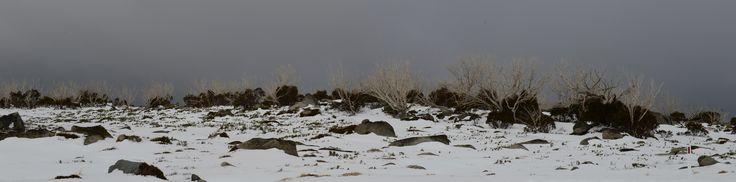 Trees burn and now frozen, www.australianphotos.com.au