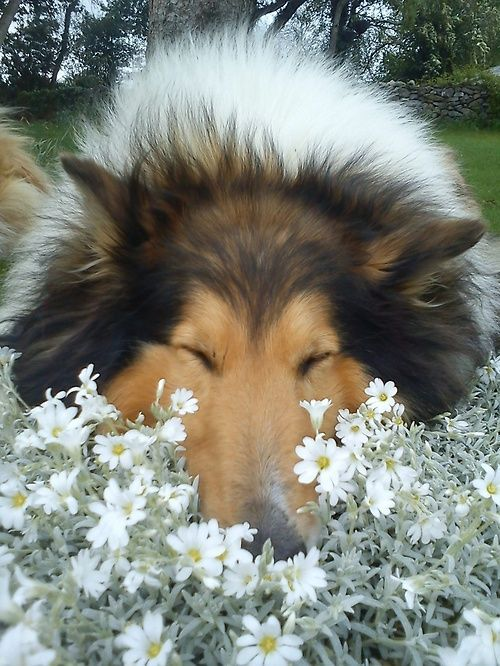 Happy Wednesday #dog lovers and #daters! Don't forget to take time and smell the flowers :) http://www.youmustlovedogsdating.com