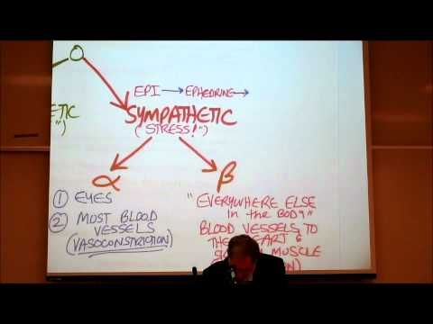 AUTONOMIC DRUGS; PART 3; Alpha & Beta Adrenergic Agonists by Professor Fink