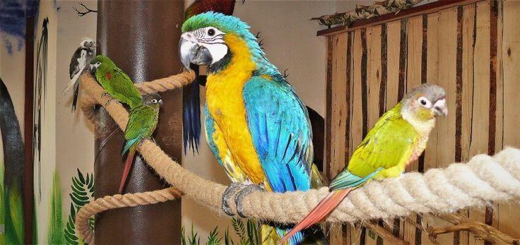 """""""Aaaa! Ona usiadła mi na głowę!"""", """"Nie, on gryzie moje ucho!"""" """"Ojej, mam je pod pachą."""" – minutę po wejściu do Papugarni w Obornikach Śląskich kolorowe ptaki obs…"""