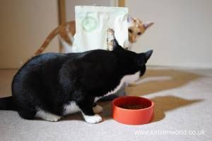 Oliver & Renegade: Who Will Have the First Go at the New Food check this fantastic photo from Katzenworld