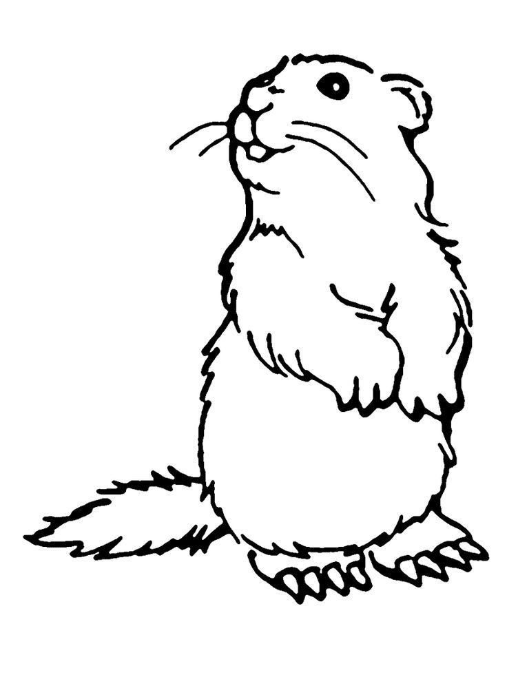 Groundhog Coloring Pages Best Coloring Pages For Kids Dog Coloring Page Animal Coloring Pages Puppy Coloring Pages