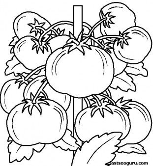 emejing coloring pages leafy vegetables photos - wapaknews.us ... - Coloring Pages Leafy Vegetables