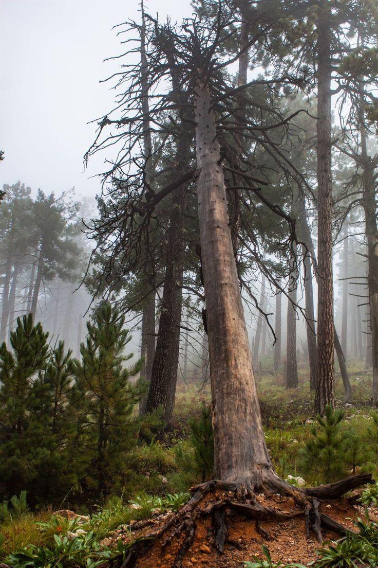 Mount Lemmon Trail Santa Catalinas