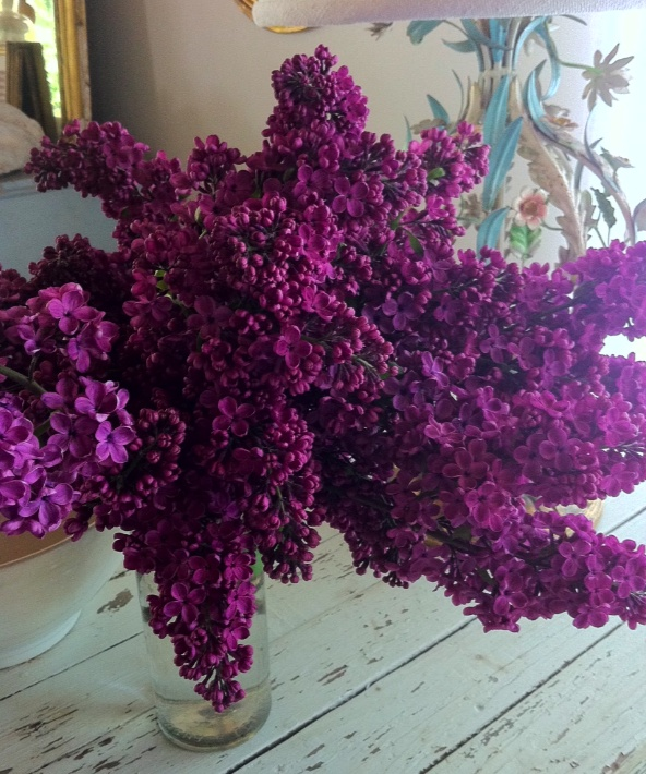 Dark purple lilacs--my favorite