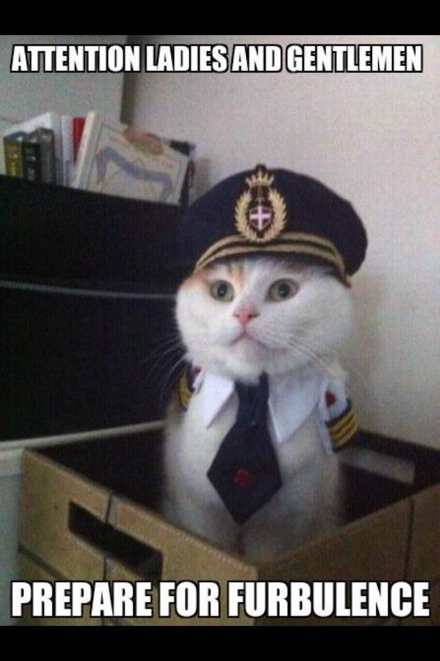 fceda53e854ea2c47397f333fc342bb5 funny cat memes funny cat pics 40 best aviation memes images on pinterest aviation humor,Funny Airplane Pilot Memes