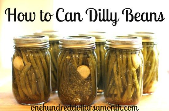 how to can dilly beans
