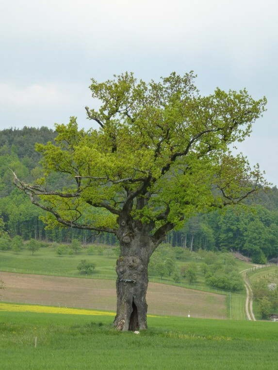 nature: Querbeet Aktiv, Querbeet Freizeit, Aktiv Querbeet, Bewegt Querbeet, Querbeet Bewegt