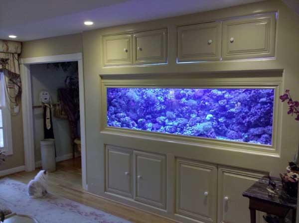 26 best home aquarium ideas images on pinterest | aquarium ideas