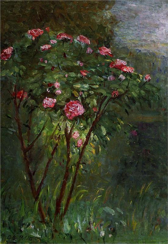 Rose Bush in Flower - Gustave Caillebotte