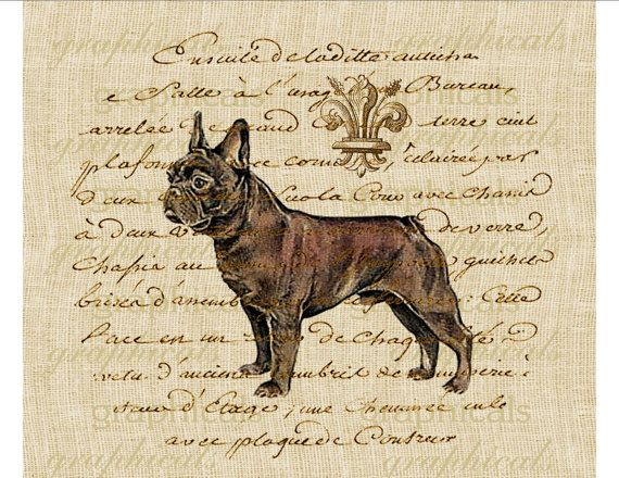 Vintage French bulldog fleur de lis ephemera Digital by graphicals