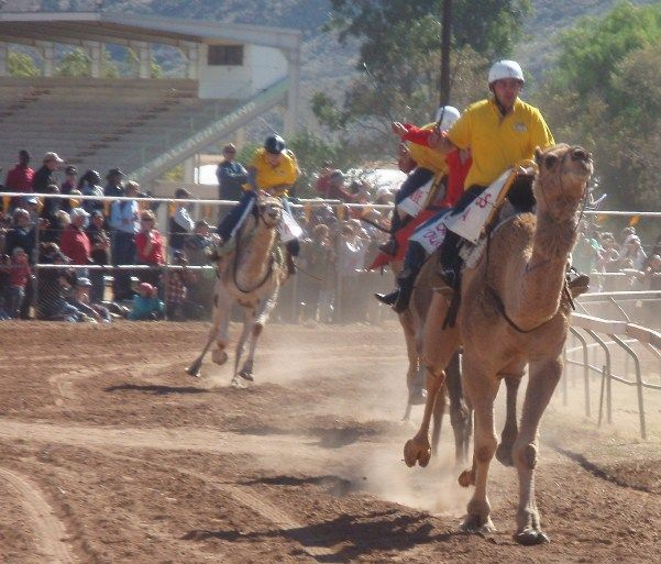Camel Cup Racing Carnival in Alice Springs, Northern Territory, Australia - Silly Season!