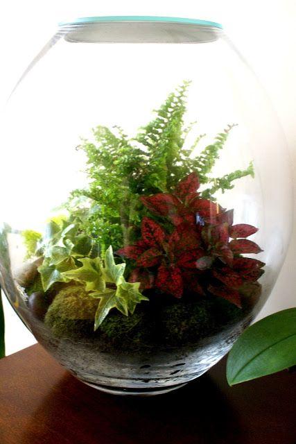 best 25 air fern ideas on pinterest airplant terrarium indoor plants succulents and. Black Bedroom Furniture Sets. Home Design Ideas